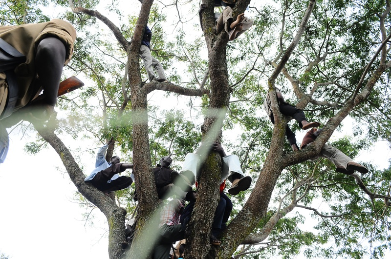 Police on watch as part of the crowd climbed trees to get better views of the presidential candidate