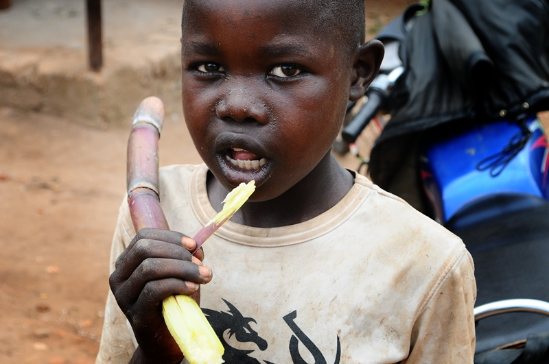 A boy chews sugar cane at a Besigye rally in Kalungu district