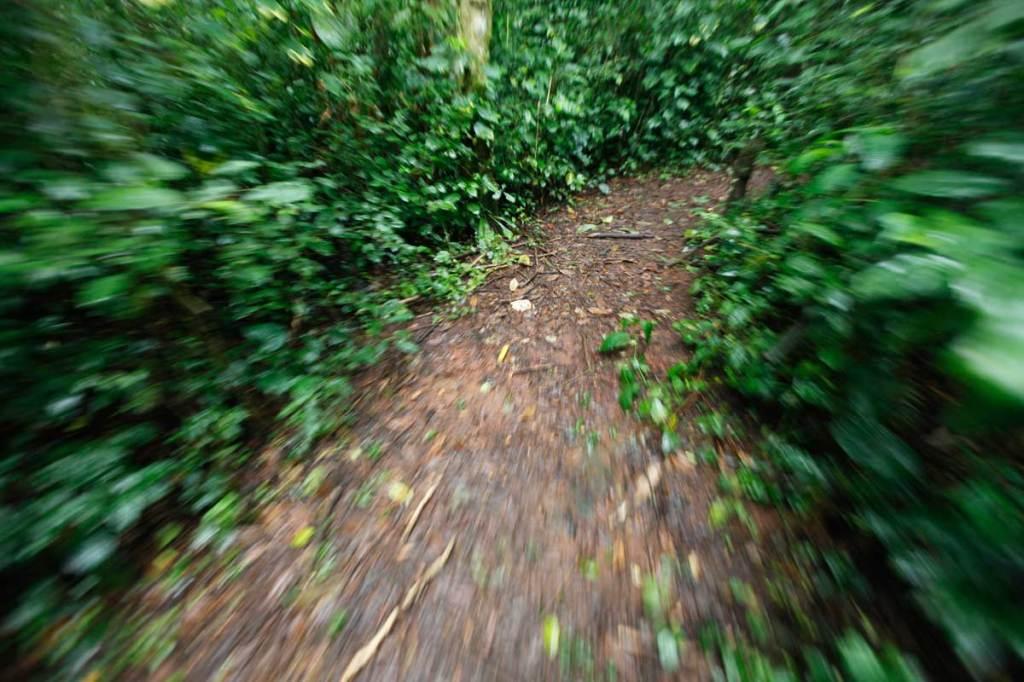Walking the 5km BLUE TRAIL inside Mabira Forest