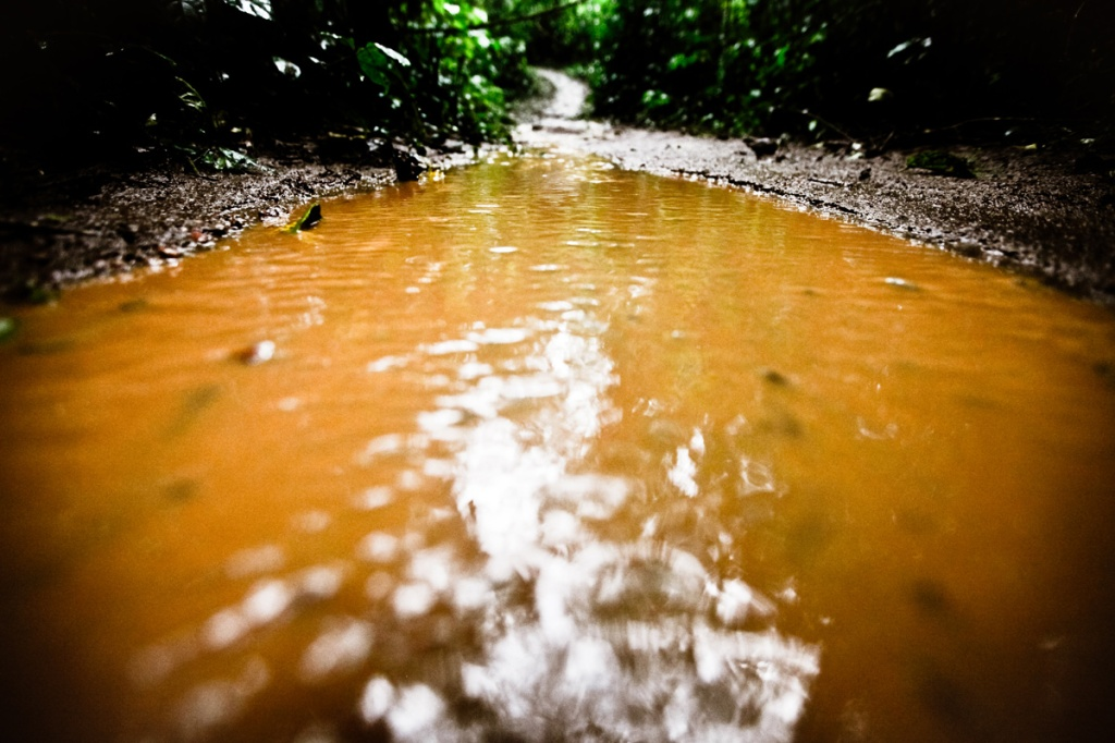 The Mabira Forest trails became water logged which made walking the trails somewhat challenging. President Yoweri Museveni recently proposed that over 7,100 hectares of part of Mabira reserve forest be given to Methta group of companies for Sugar cane plantation.