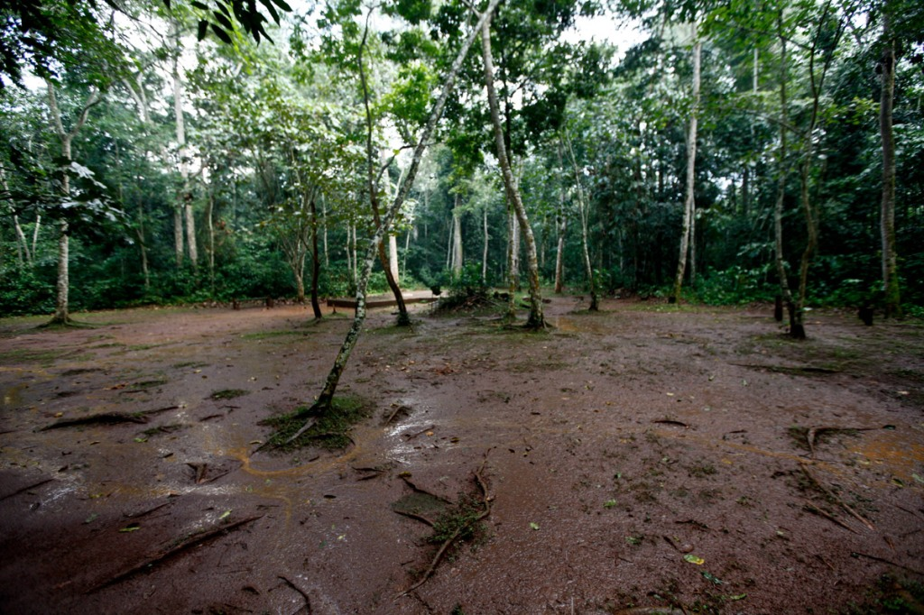 About 25 minutes into the trail, I came across the 'Banda Camp site'. It's about 1 hectare camp space capable of accommodating 50 people with their tents. President Yoweri Museveni recently proposed that over 7,100 hectares of part of Mabira reserve forest be given to Methta group of companies for Sugar cane plantation.