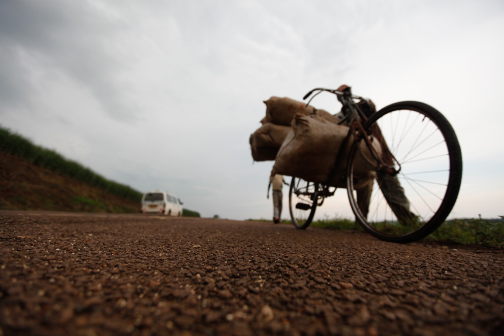A SCOUL out grower transports his canes on a bicycle in Lugamango near Mabira Forest. President Yoweri Museveni recently proposed that over 7,100 hectares of part of Mabira reserve forest be given to Methta group of companies for Sugar cane plantation.