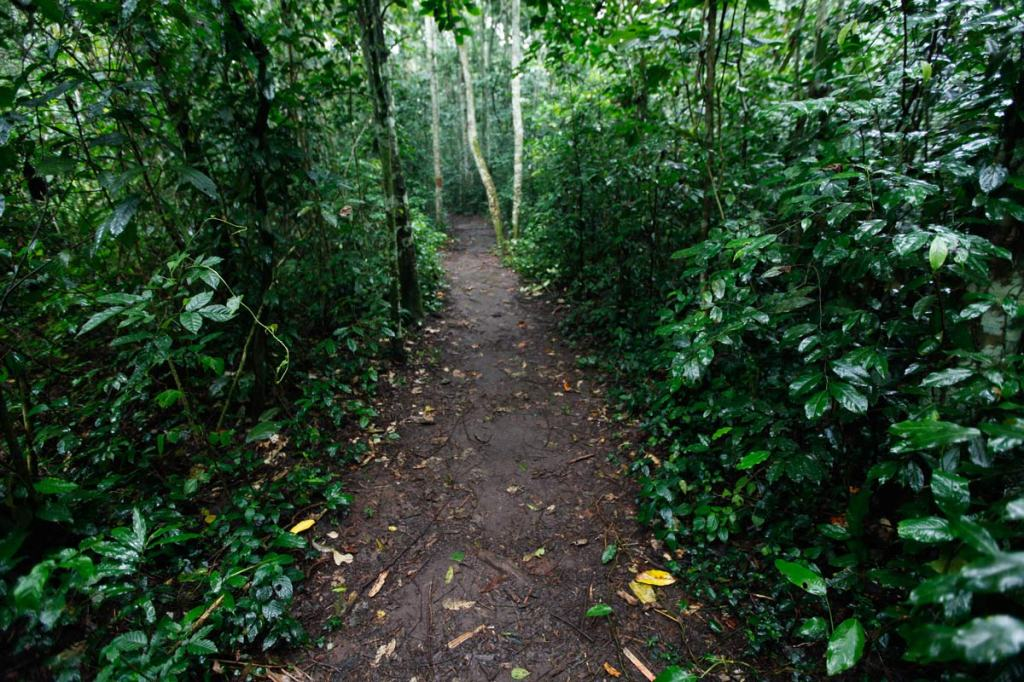 Walking the 5km BLUE TRAIL inside Mabira Forest. President Yoweri Museveni recently proposed that over 7,100 hectares of part of Mabira reserve forest be given to Methta group of companies for Sugar cane plantation.