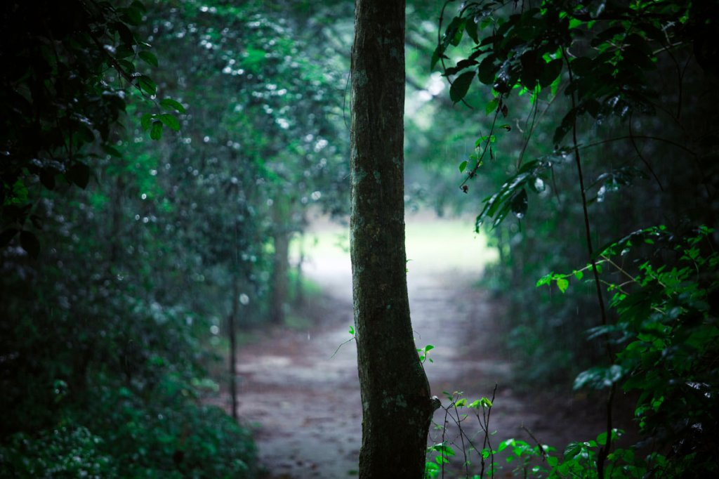 Forest cover is composed of both young and old. President Yoweri Museveni recently proposed that over 7,100 hectares of part of Mabira reserve forest be given to Methta group of companies for Sugar cane plantation.