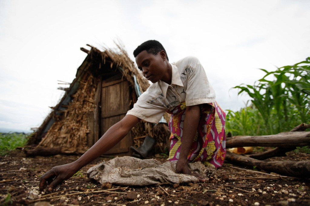 A displaced woman who lost a child does her home chores next to her makeshift house she built since the National Forestry Authority (NFA) and Police forcefully evicted her and 22,499 other people in Kiboga and Mubende districts to allocate the land to New Forests Company (NFC) to plant trees as part of a lucrative scramble for arable land that can be used to satisfy the multi-billion dollar carbon trading ponzi scheme, which is worth $1.8 million a year to the company