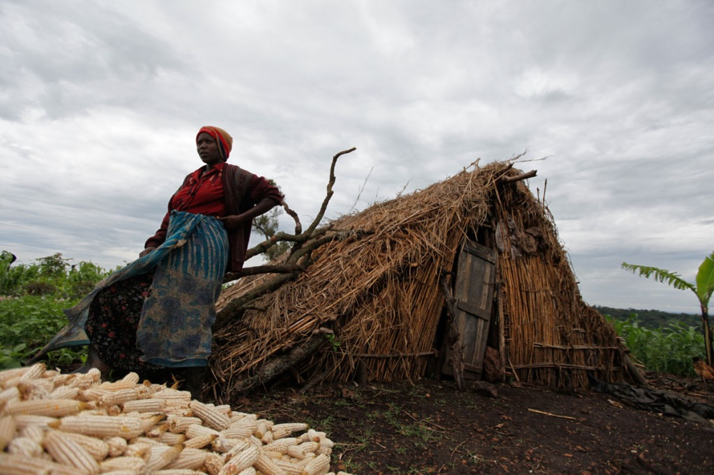 Another displaced mother takes a break from sorting maize cobs next to her makeshift house she built since the National Forestry Authority (NFA) and Police forcefully evicted her and 22,499 other people in Kiboga and Mubende districts to allocate the land to New Forests Company (NFC) to plant trees as part of a lucrative scramble for arable land that can be used to satisfy the multi-billion dollar carbon trading ponzi scheme, which is worth $1.8 million a year to the company